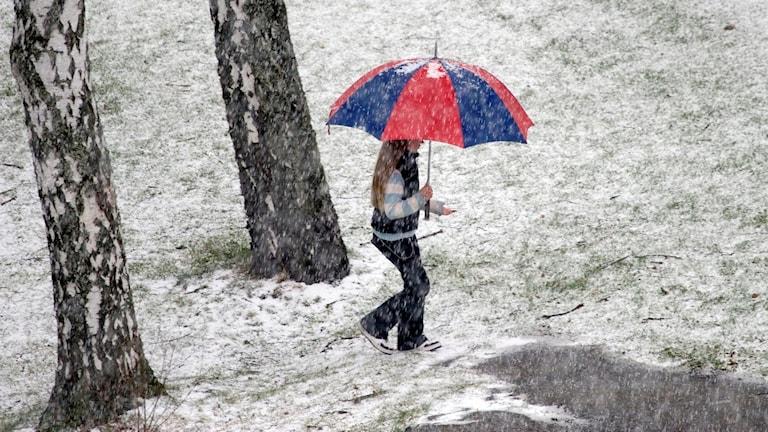 Foto av kvinna med paraply i Aprilväder. Det snöar på det gräset.