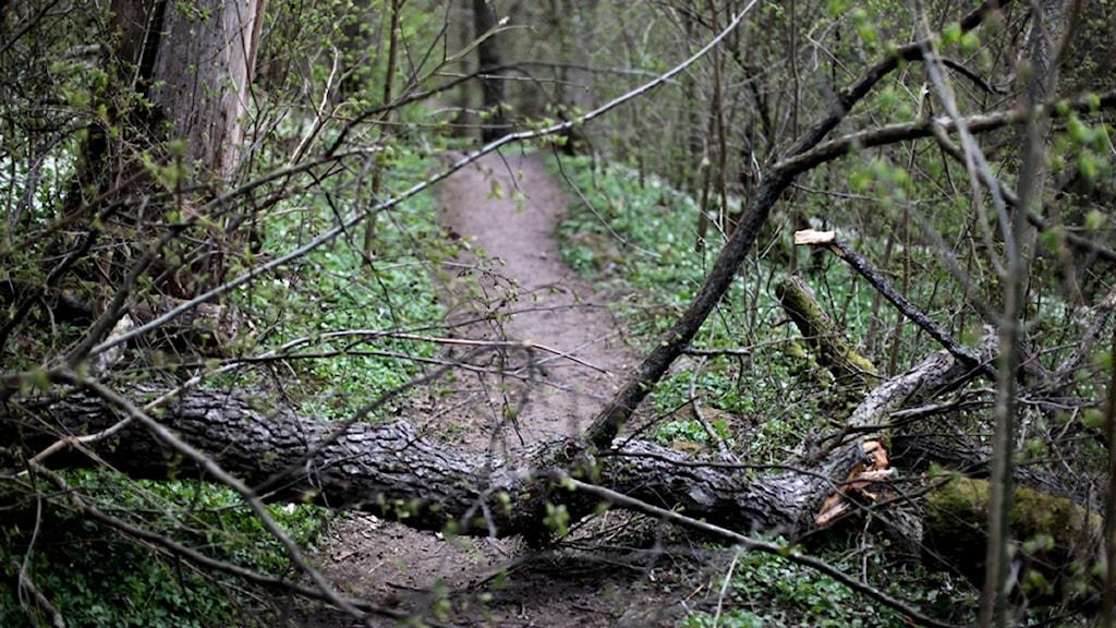 Det är risk för att fler träd och grenar blåser ner i den kraftiga blåsten.