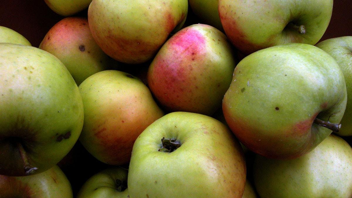 äpplen för allergiker