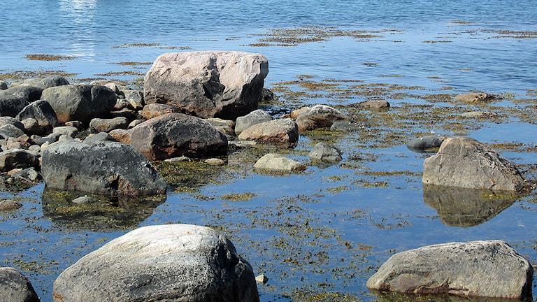 Skärgårdshav. Foto: Anna Olofsson/SR