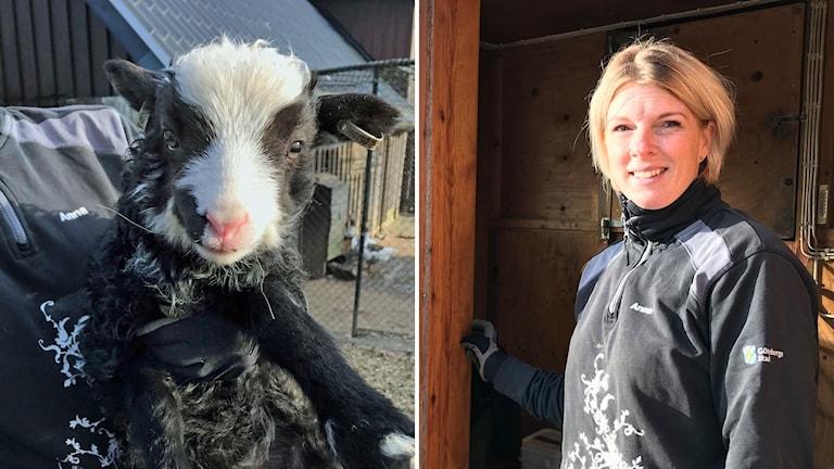 en bild på ett lamm och en bild på en blond kvinna.