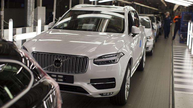 Nytillverkade Volvobilar på rad i fabriken.
