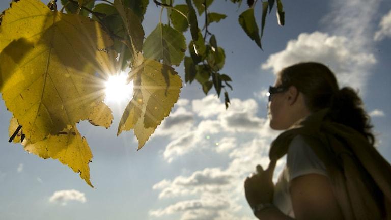 Sol. Foto: Anders Wiklund/TT