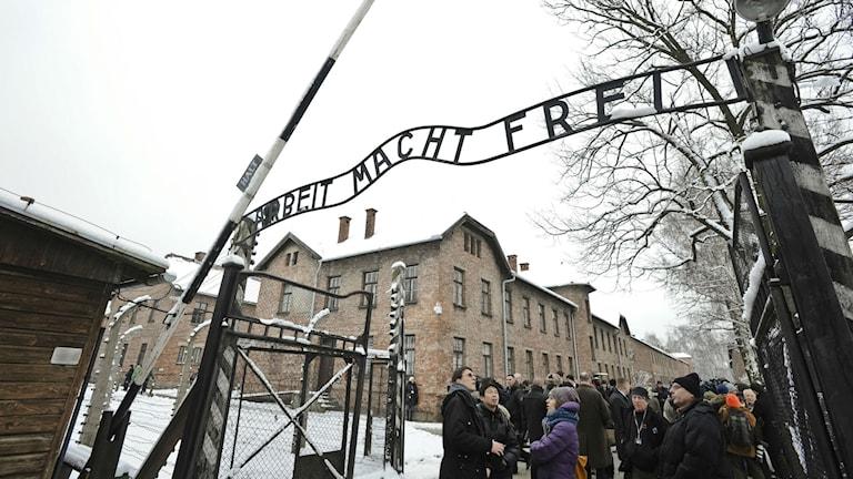 Auschwitz Foto: AP Photo/Alik Keplicz
