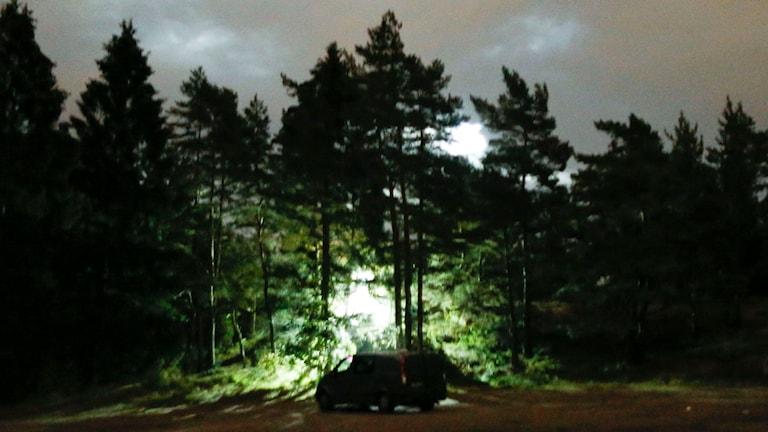 Skogsdunge som lyses upp av polisens lampor. Foto Adam Ihse / TT