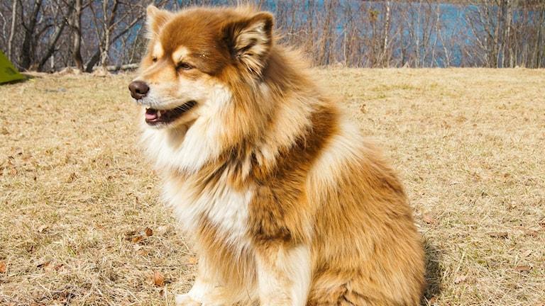 Hunden Moyo återfunnen. Foto: Privat
