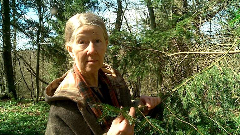 Vit äldre kvinna med grått långt hår i tofs. Ute i skogen, håller i en grankvist.