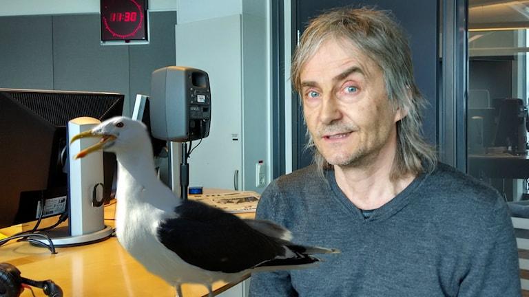 """I sin """"Västkustrock"""" använder Björn Olsson måsar och trutar."""