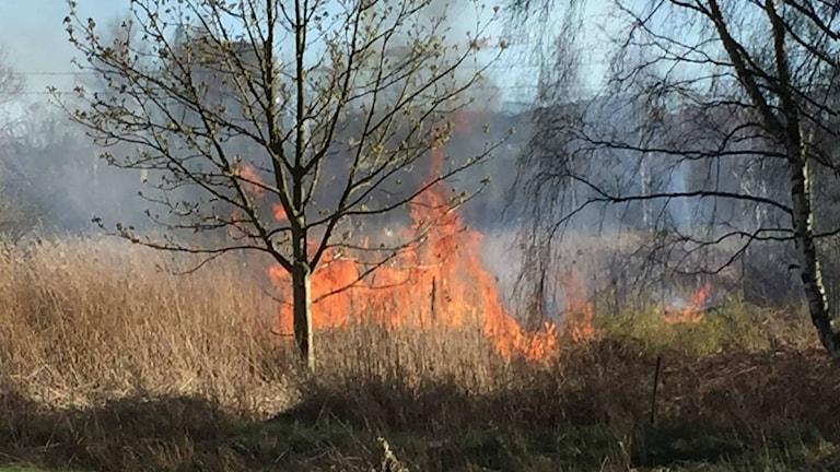 Gräsbrand vid Lunbyleden