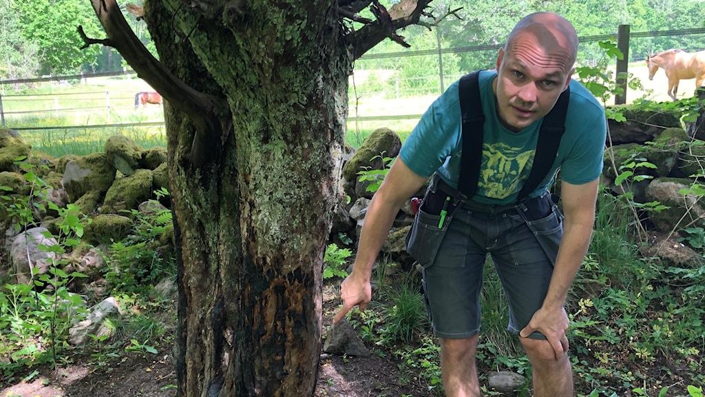 En man pekar på ett skadat träd