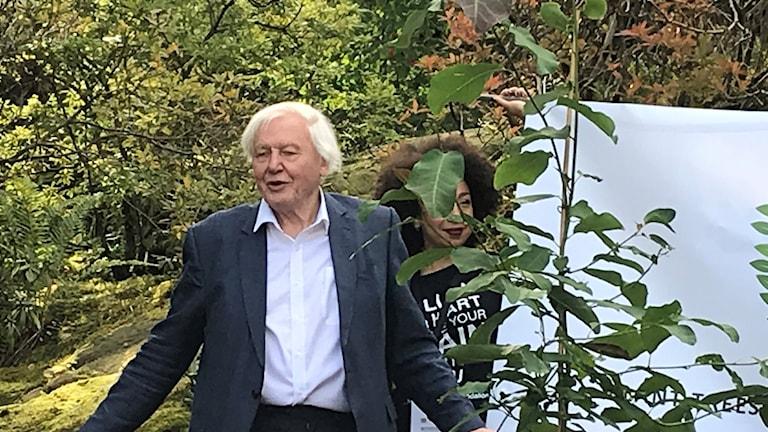 En man bredvid ett träd.