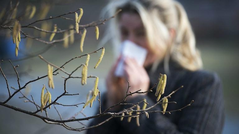 Allergisk kvinna snyter sig. Foto: Fredrik Sandberg/TT