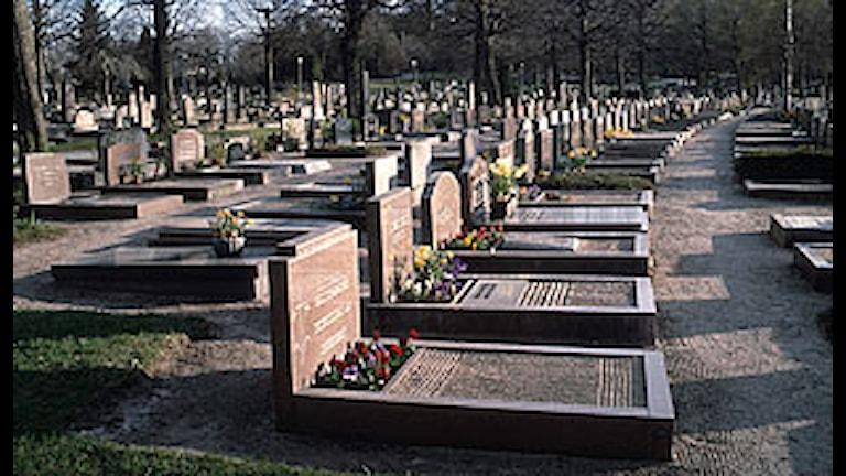 Östra begravningsplatsen i Göteborg. Foto: Bertil Olofsson/SVT