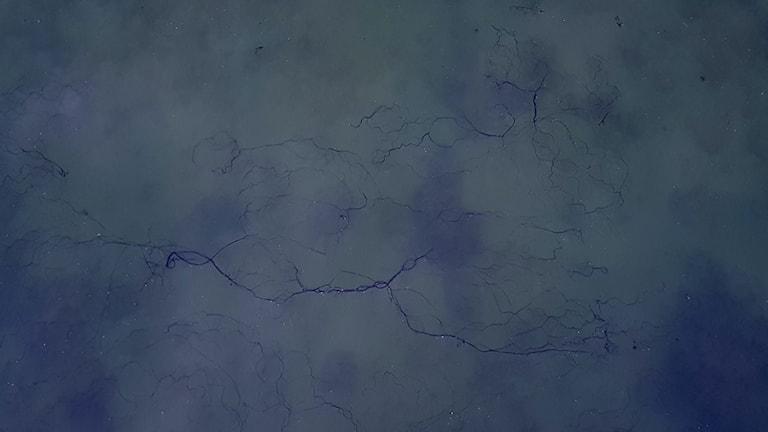 Oljeliknande klumpar Hakefjorden