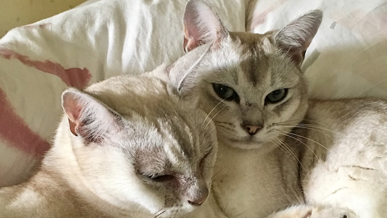 Två katter i närbild