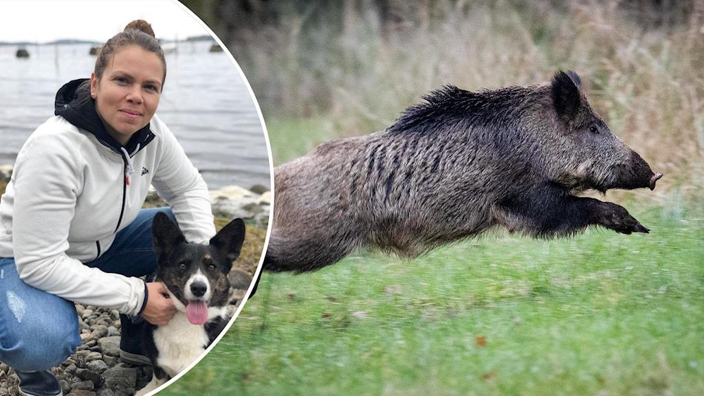 Kvinna och hund och vildsvin