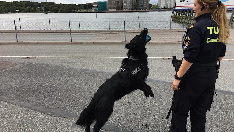 Hunden Leo tillsammans med hundföraren Johanna letar efter narkotika vid Tysklandsterminalen i Göteborg. Foto: Josipa Kesic/Sveriges Radio