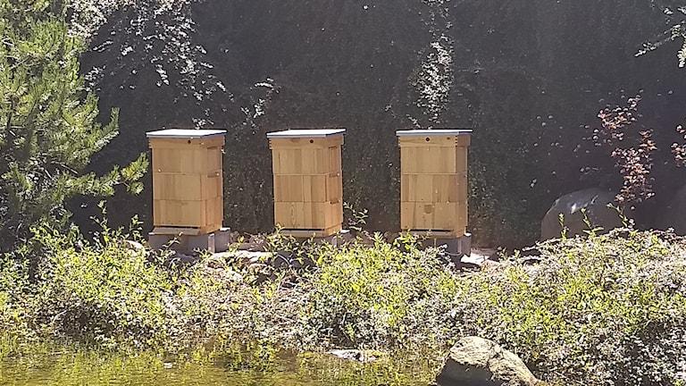 Liseberg har tre bikupor