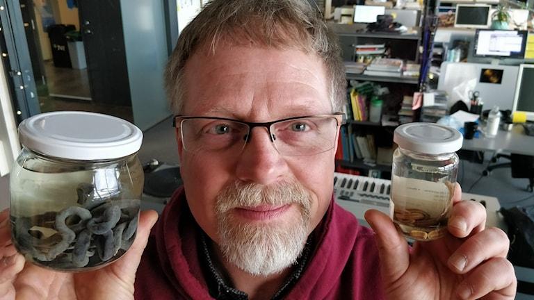 Kennet Lundin, biolog på Naturhistoriska, visar upp två mystiska havsdjur, Långsnöre och större julklappsmask