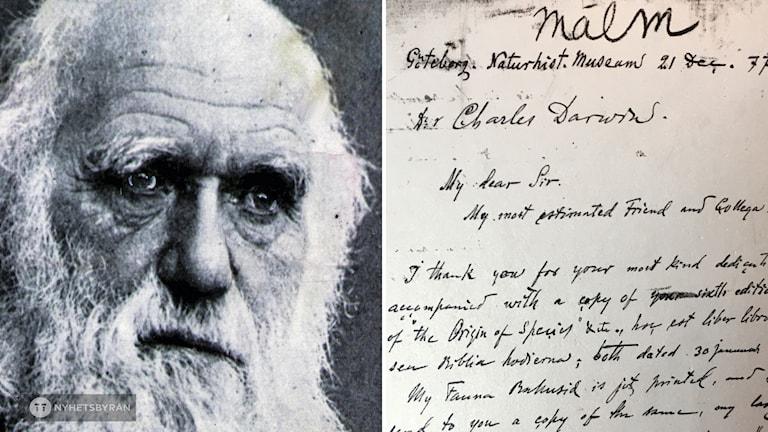 Charles Darwin och ett av de brev August Malm, intendent på naturhistoriska skickade till honom 1874. Nu efterlyses Darwins brev till göteborgaren.