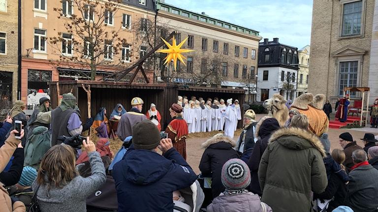 Julkrubba med kamel, åsna och får på Domkyrkoplan.