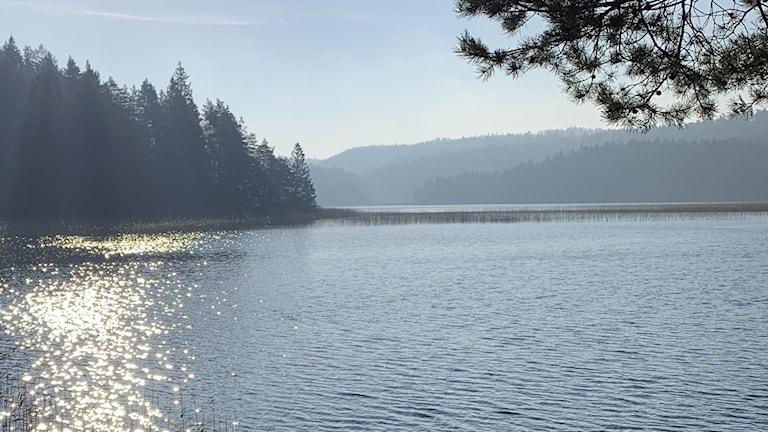 Glittrande vatten framför en trädbeklädd udde vid en sjö.
