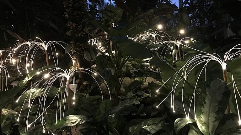 Ljusdioder bland träden i palmhuset
