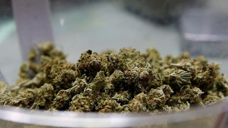 Torkade cannabisblad