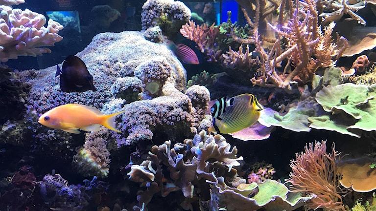 Sjöfartsmuseets korallsamling och fiskar