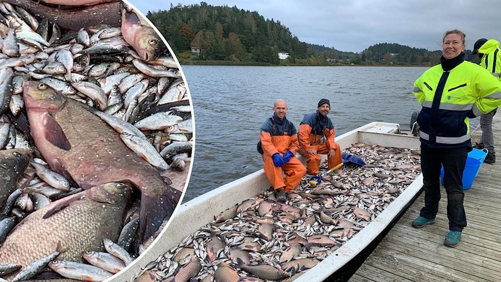 fiskar i båt och kvinna på brygga