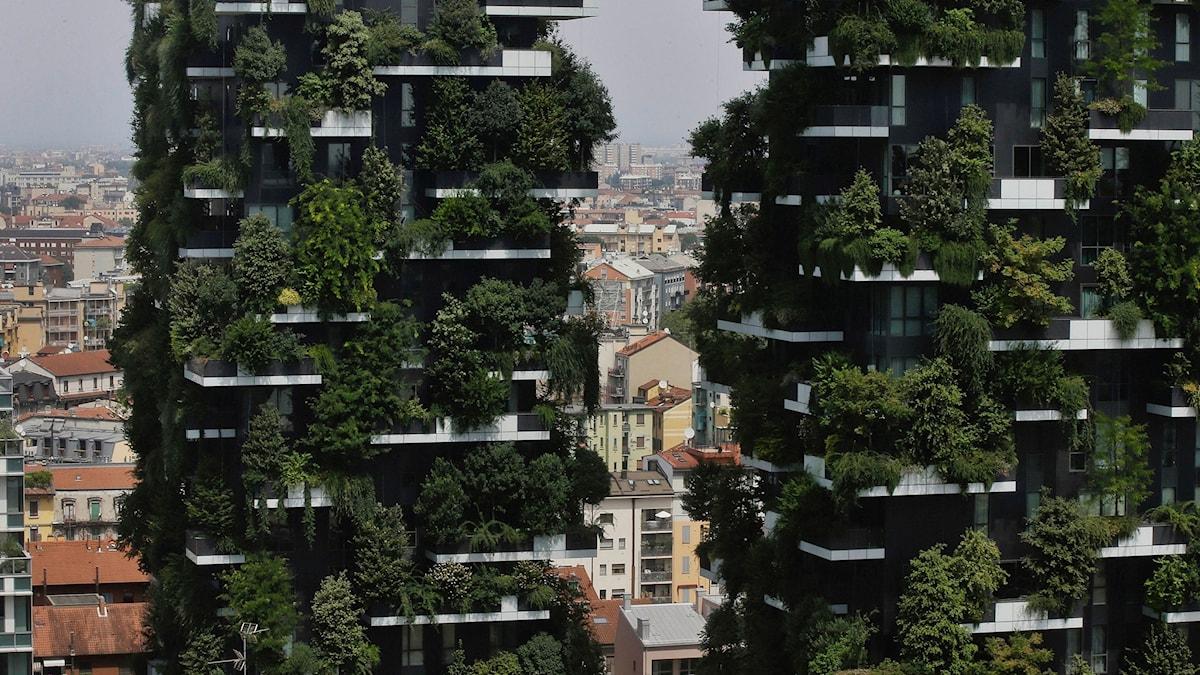 Milaanin kaksi asuinrakkenusta jossa on istutetty puita, sitä kusutaan pystysuoraksi metsäksi.