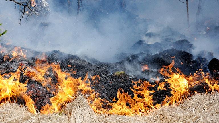 En brand i gräs.