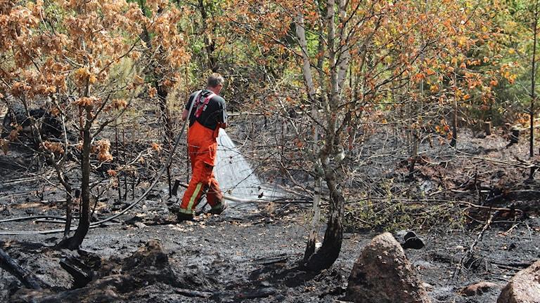 Brandman på eftersläckning i skogen. Foto: Mikael Eriksson/Sveriges Radio