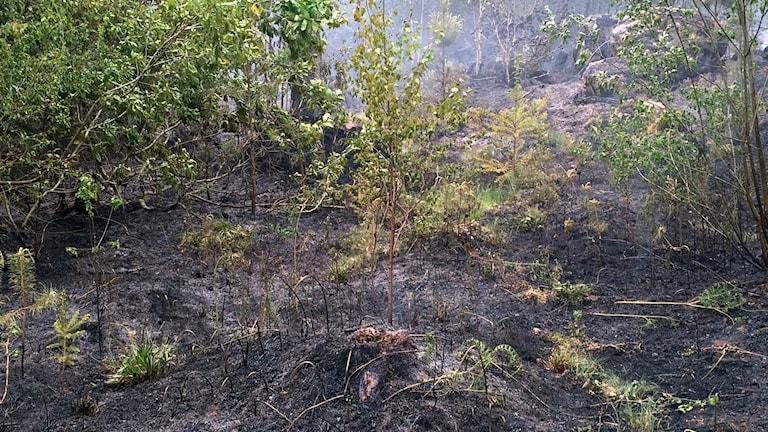 resterna av en gräsbrand i Långgöl i Ronneby.