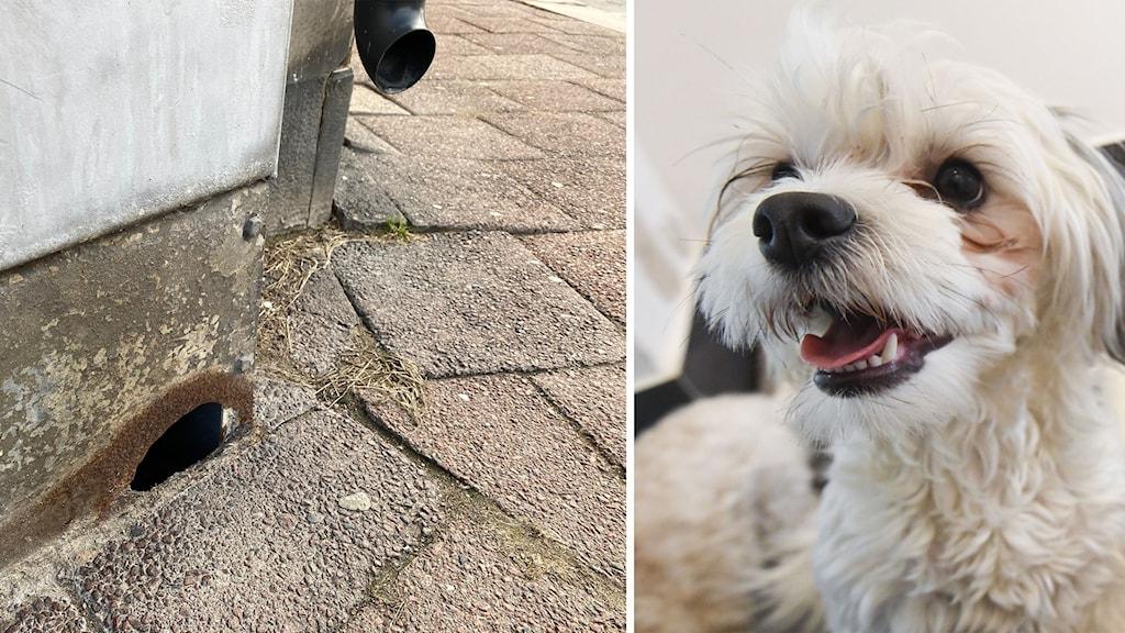 Bild till vänster ett elskåp där det rostat till ett hål i hörnet. Bild till höger en vit glad hund.