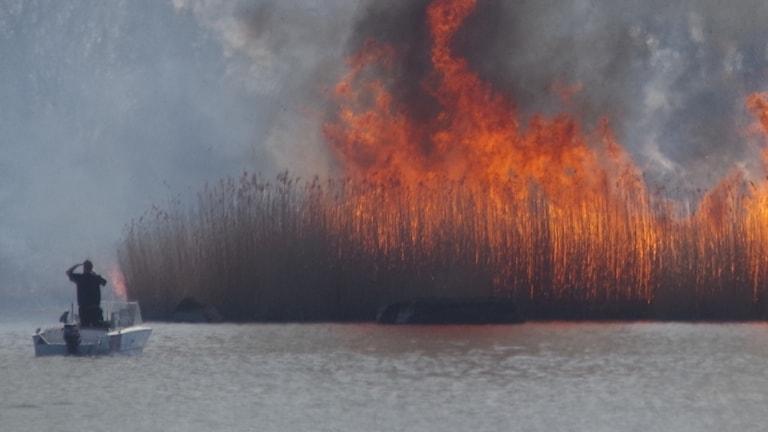 Brand på ön Ramsö. Foto: Björn Hansson