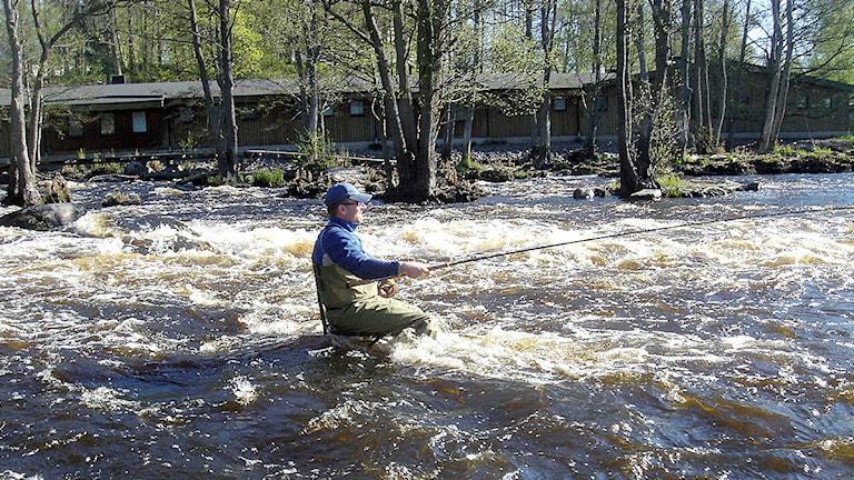 En man fiskar i Mörrumsån. Foto: SR.