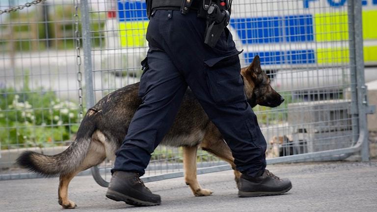 Polishund, polisman och polisbil. Foto: Fredrik Sandberg/TT.