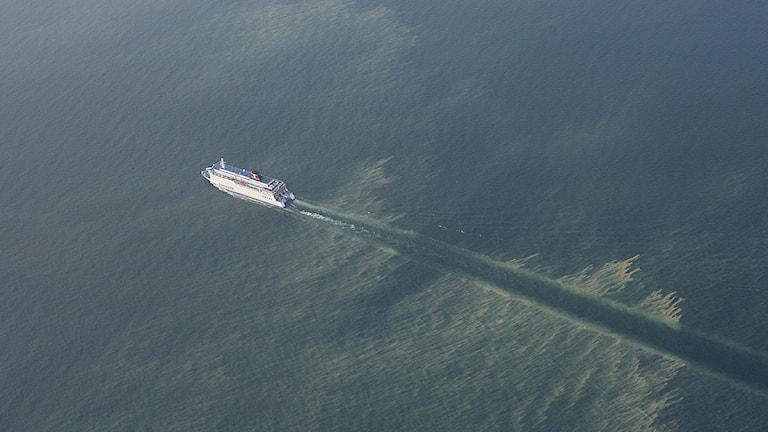 Polenfärjan åker genom gulgrön algsörja. Foto: Kustbevakningen