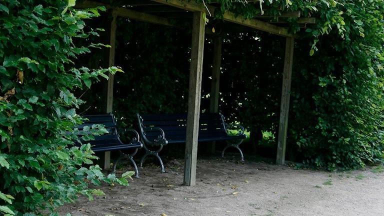 Våldtäkt i Hoglands park. Foto: Peder Broberg/SR.