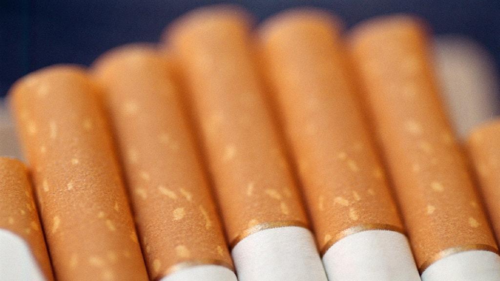 Filterändan av sju cigaretter. Foto: Fredrik Persson/Scanpix.