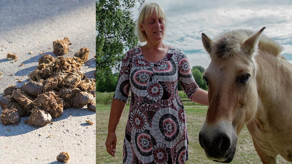 Hästbajs, Maria och en häst.