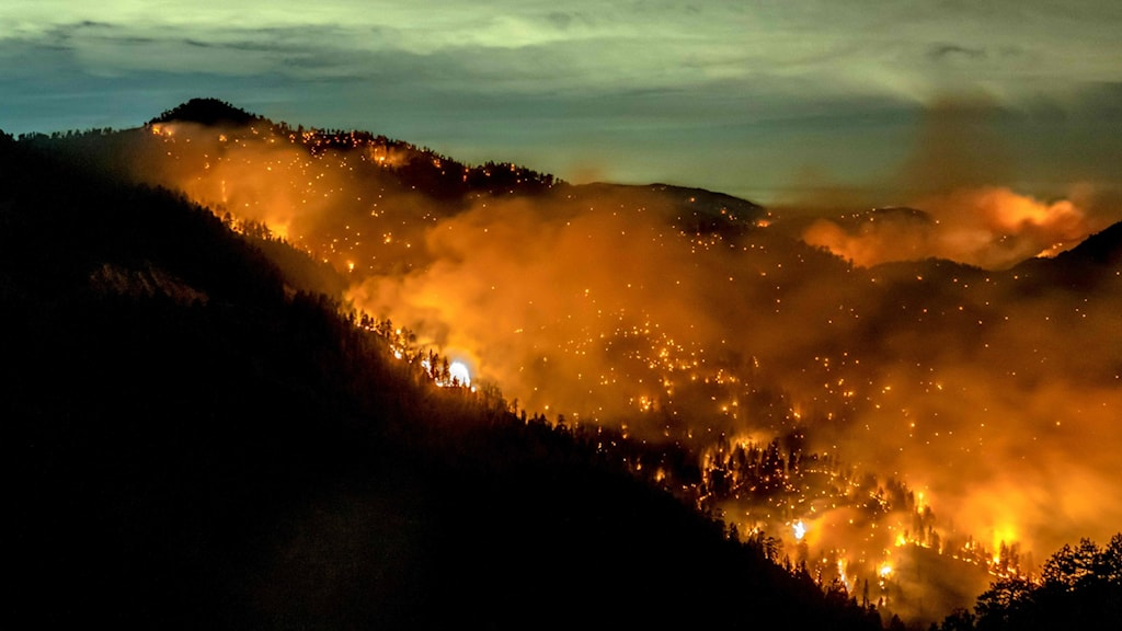 En brand i en skog rasar.