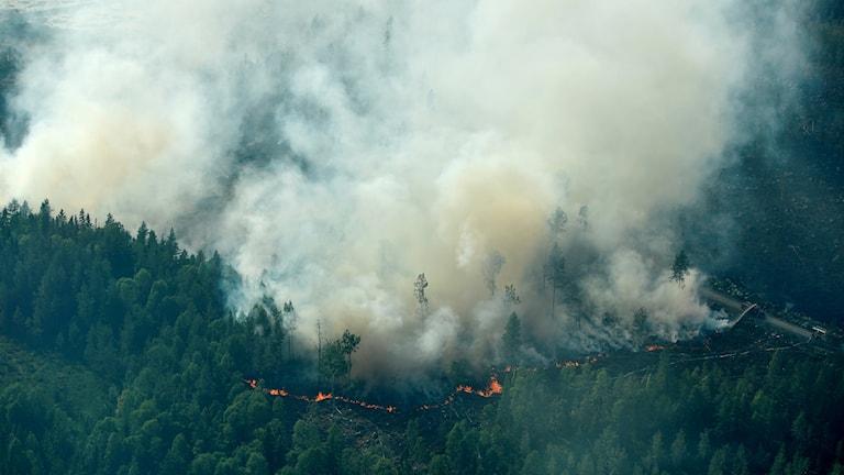 Rök som stiger från en brinnande skog.