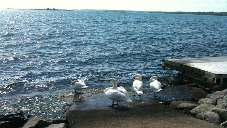 Havsmiljön i Hanöbuktens djur- och växtliv ska kartläggas.