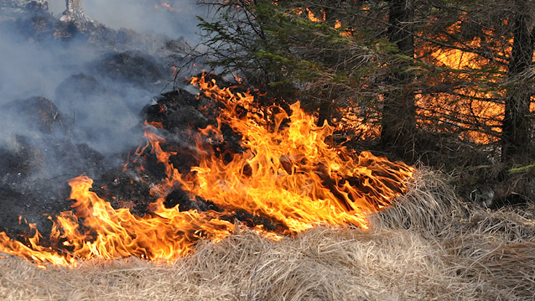 Gräsbrand. Foto:Scanpix