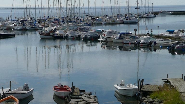 En sommarbild över Hälleviks hamn med fullt med båtar. Foto: Privat