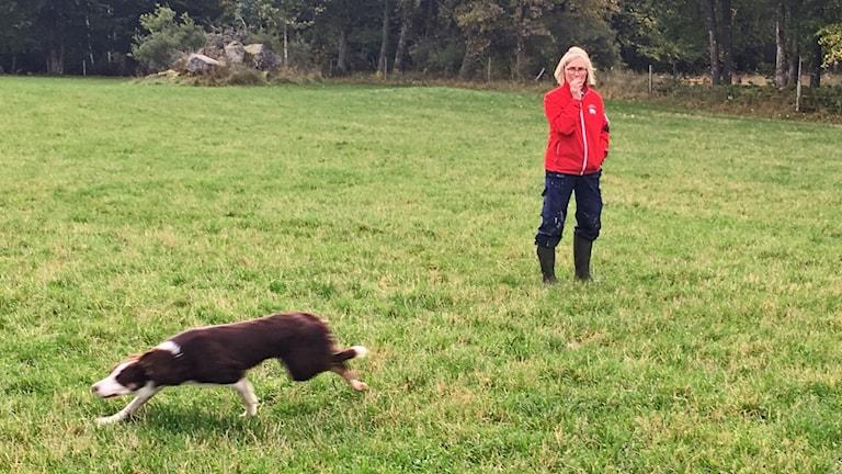 Vallhund och matte Lena Karlsson