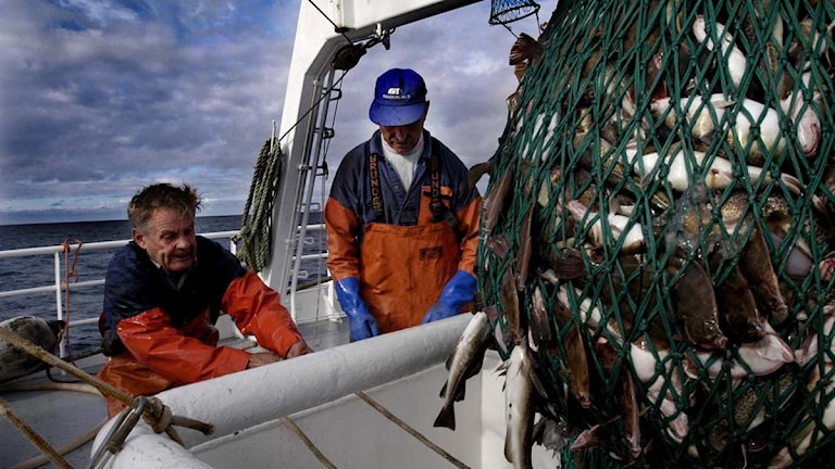 Torskfiske i Östersjön. Foto: Daniel Nilsson.
