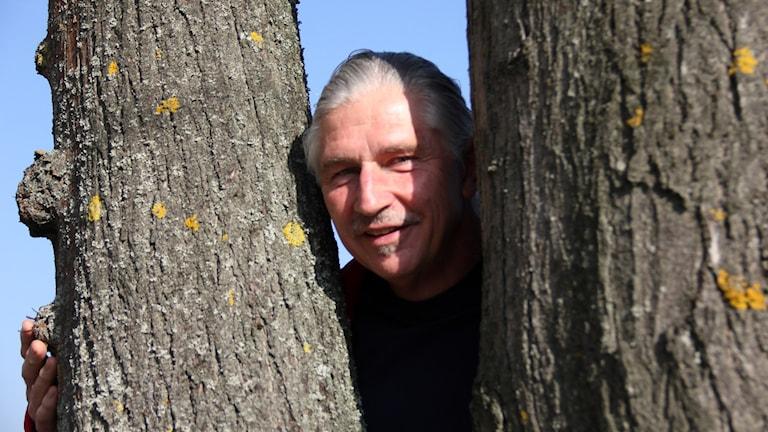 Andris Jurjaks, trädgårdsmästare, tittar fram mellan två trädstammar. Foto: Stina Linde/Sveriges Radio.